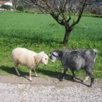 Casa Feronia Yolunda İnatçı Bir Çift ;) - A Stubborn Couple On The Way To Casa Feronia ;)