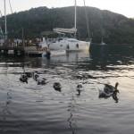 Orhaniye Deniz Kenarında Ördekler Deniz Sefasında ;) - Ducks Having Sea Side Joy At Orhaniye Sea Side ;)
